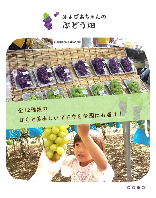 全12種類の甘くて美味しいブドウを全国にお届け