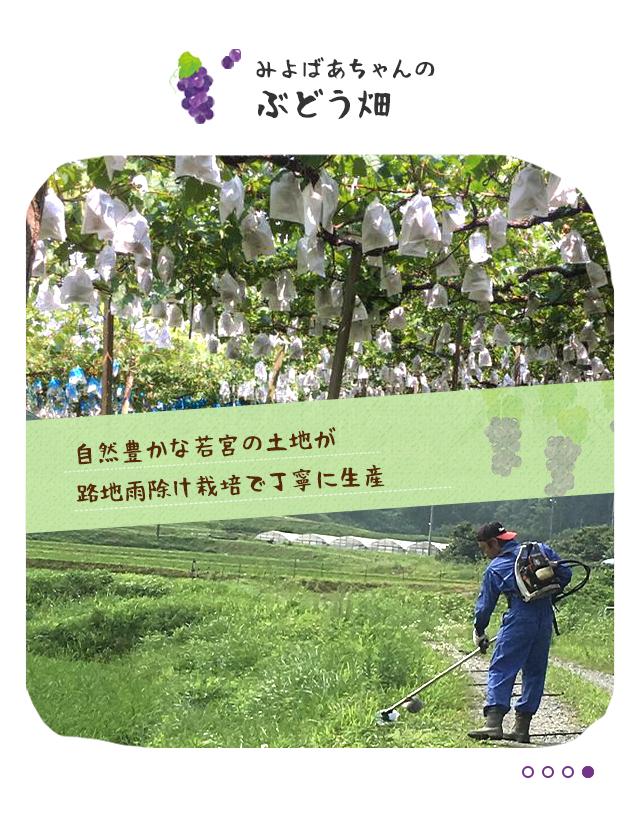 自然豊かな若宮の土地が路地雨除け栽培で丁寧に生産